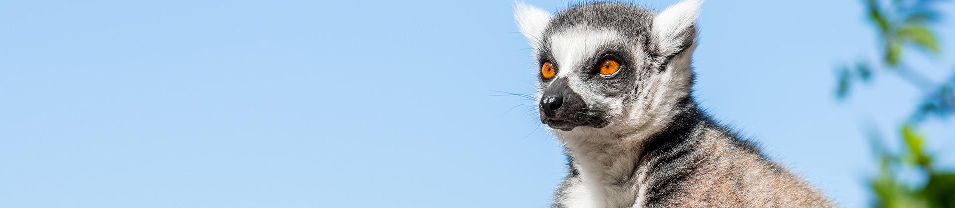 MK Lemur Foundation
