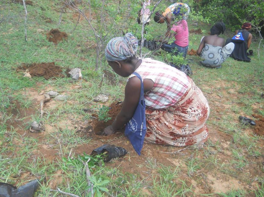 Reforestation 2
